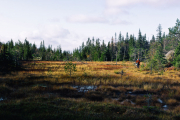 Paanajärvi